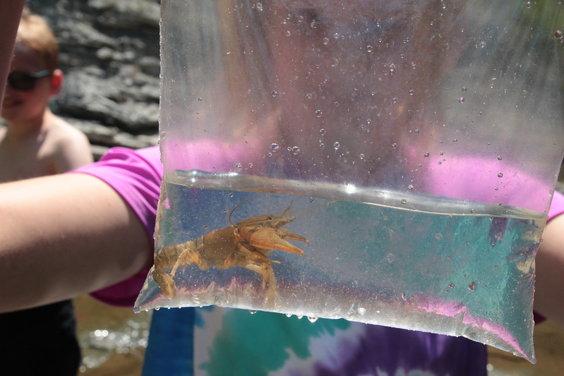 Crayfish by Chelsea Jandreau