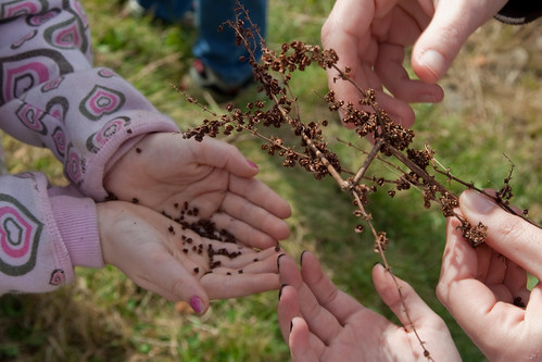 Audubon Little Explorers Learn About Seeds and More, Saturday, September 11