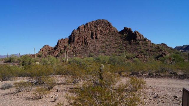 organ pipe nationalpark in Arizona