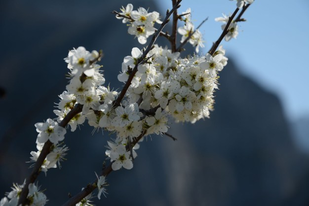 combe_oyans_printemps
