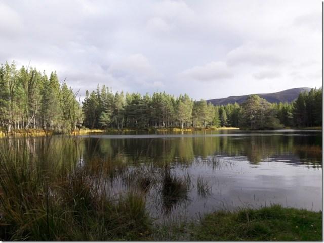 glenmoreforest6