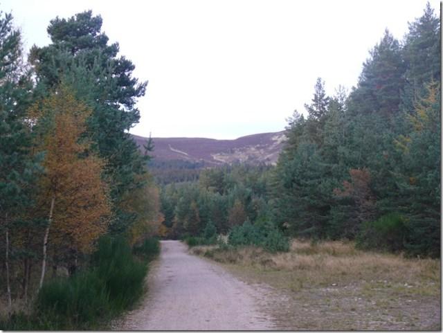 glenmoreforestpark4