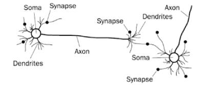 Jaringan saraf biologis. [Apa itu neural network]