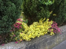 A Garden Wall on Prescot Road, snapped by Joyce N on an evening walk