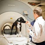 dog cognition