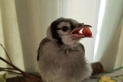 bird wildlife center