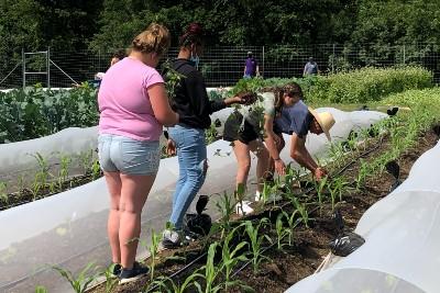 waynesboro gardening