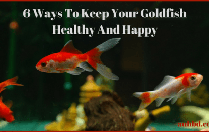6 Ways To Keep Your Goldfish Healthy And Happy