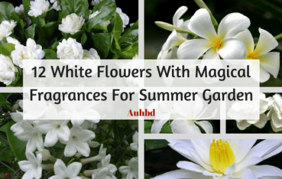 12 White Flowers With Magical Fragrances For Summer Garden
