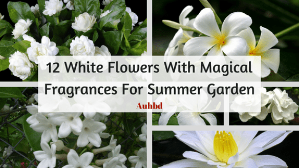 12 white flowers with magical fragrances for summer garden auhstyle mightylinksfo