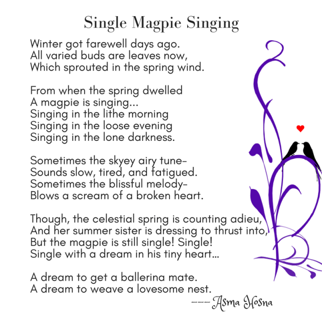 """Single Magpie Singing"" by Asma Hosna"