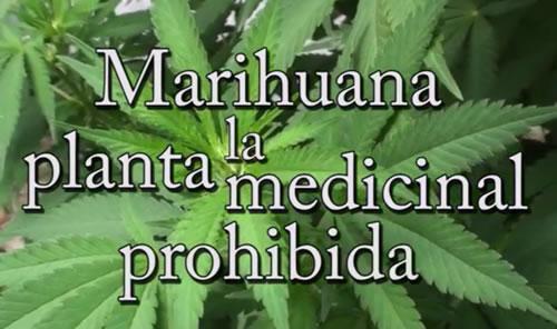 Marihuana, la planta medicinal prohibida (con Josep Pàmies)