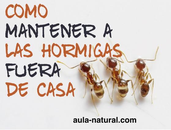 Cómo mantener a las hormigas fuera de casa