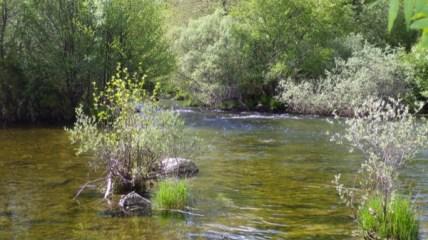 Salida del río Tera del lago
