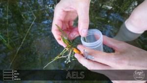 muestra vegetación perifiton