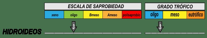3 taxones del género Hydra