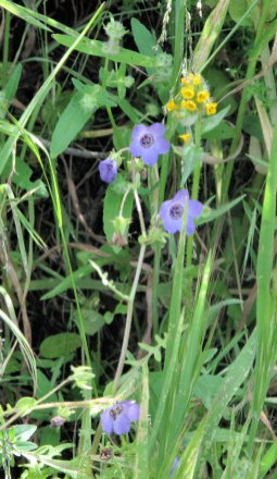 Sespe Alder Creek 04-29-09 (47)