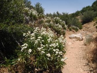 Bradford Ridge Path (21)