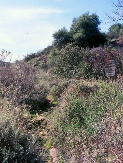 Tar Creek Sespe (6)