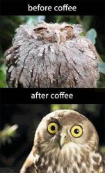 funny-before-after-coffee