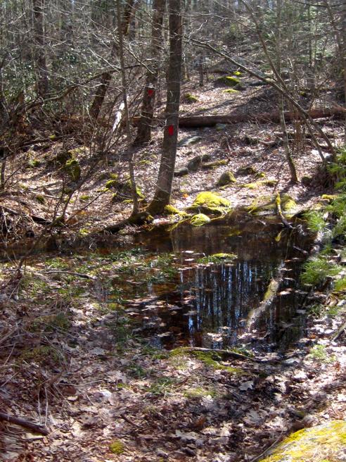 boggy trail