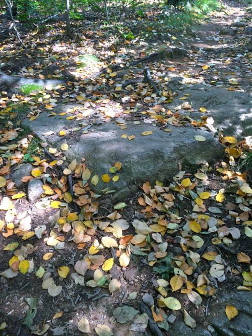 leaves, already