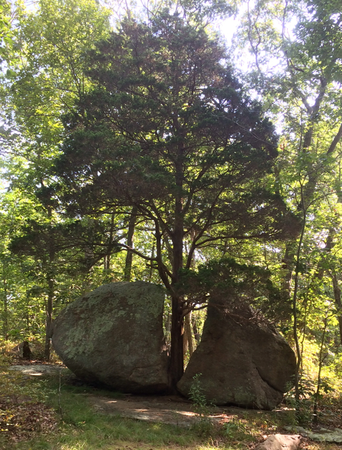 iconic tree and boulder