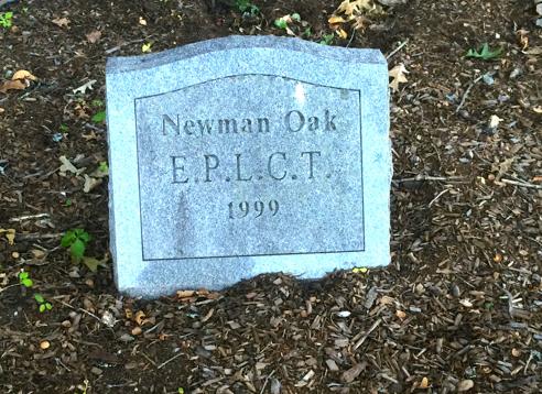 plaque under the newman oak