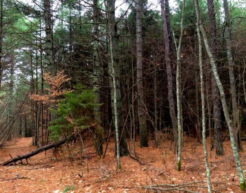 dark foreboding woods