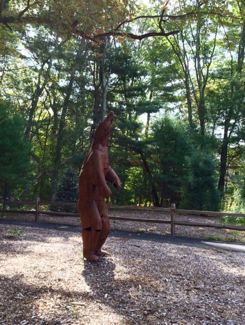 bear sighting in franklin