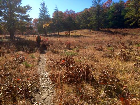 path through the cemetery