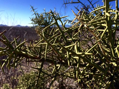 Some stabby, bitey vegetation