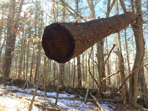 An Ominous-Looking Log