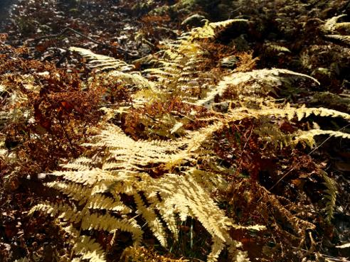 Bright Yellow Ferns