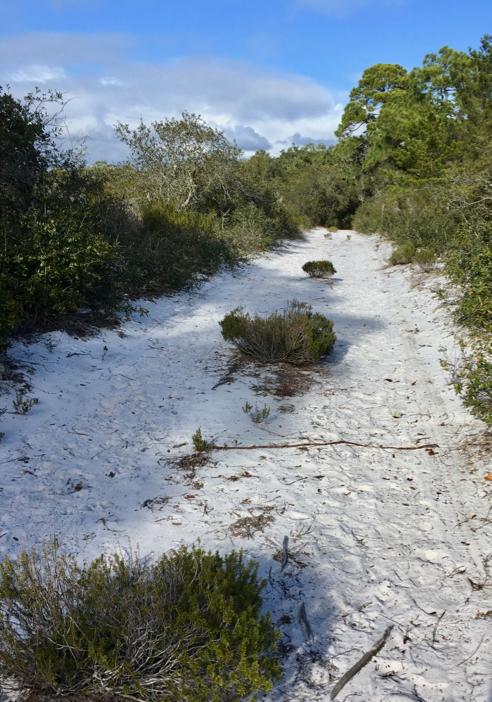 Hammock Spur Trail