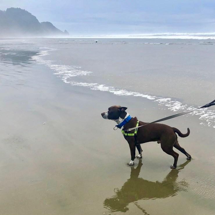 davy on the beach