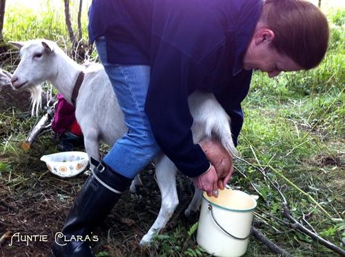 milking the goat full