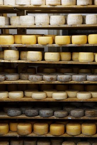 Langbaken cheese in the maturing chamber