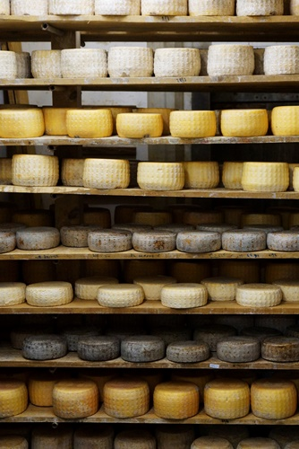 Langbaken cheese in the maturing chamber