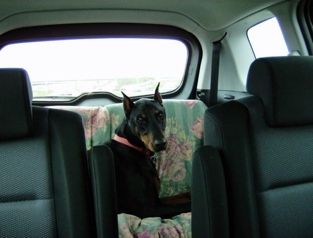 auntie stress dog seat
