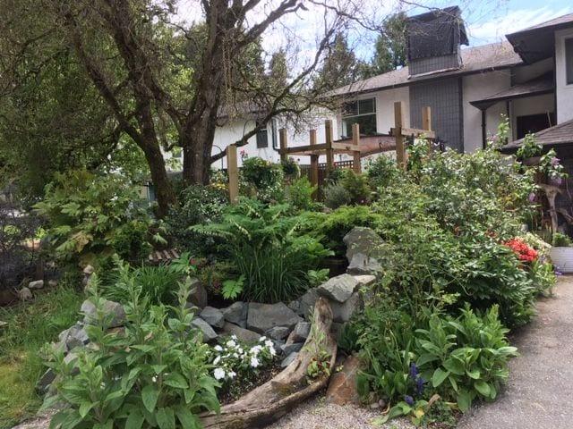 A lush green garden.