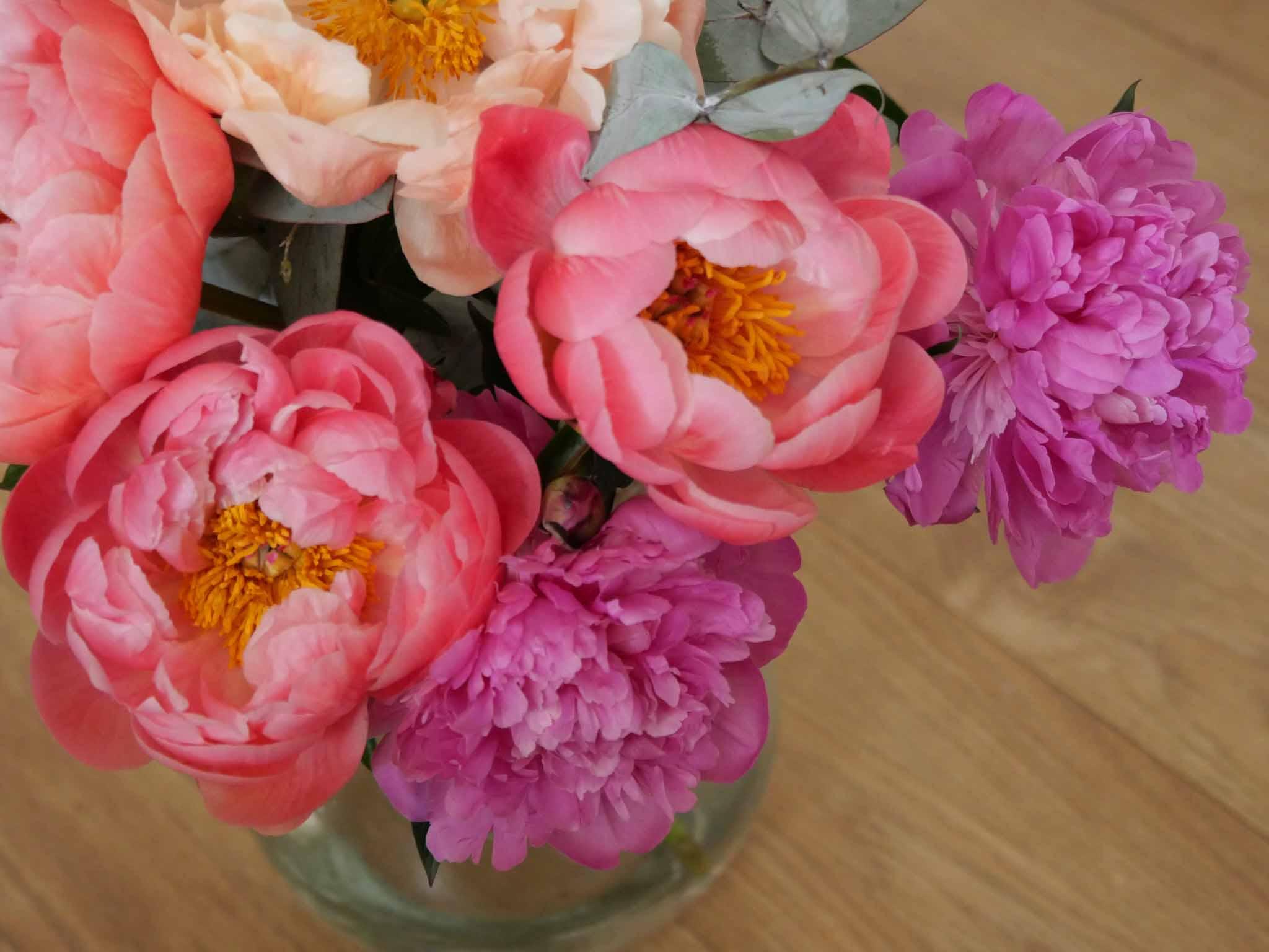 Pivoines camaieu de roses
