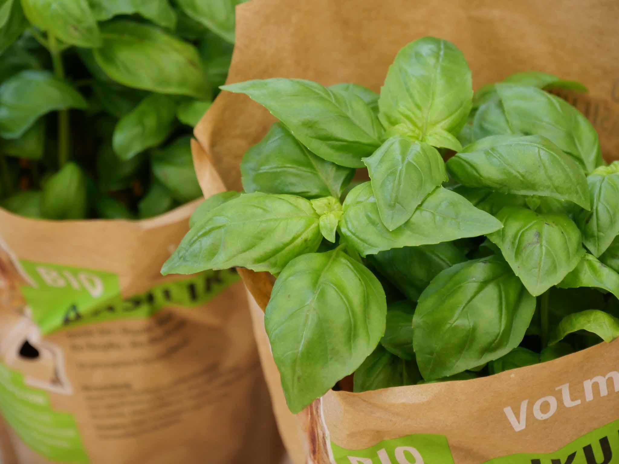 Plant bio