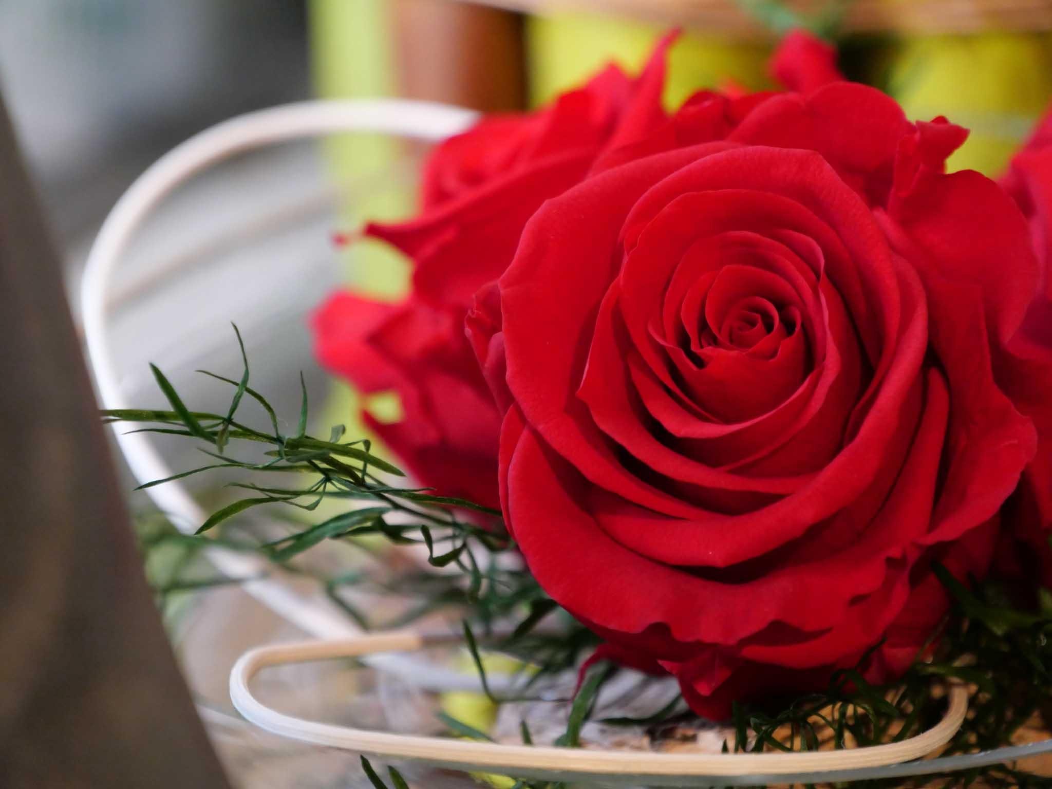 Rose stabilisee