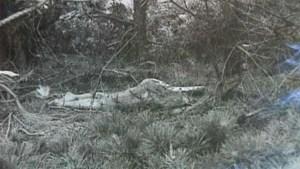 La donna uccisa che apparve per caso ne Lo Squalo di Spielberg