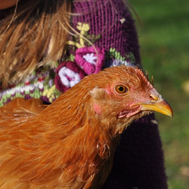21 aurifil designer girl and her chicken