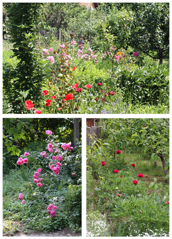 5 countryside garden.jpg