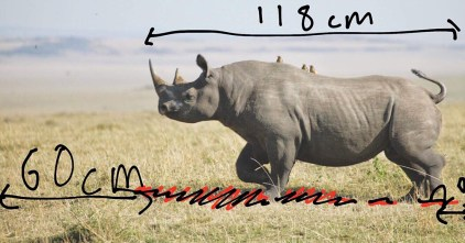 Measuring the Rhino