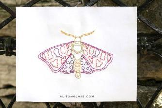 Attacus Linework Moth
