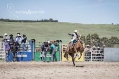Saddle Bronc_02